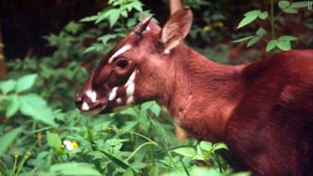 Reserve established for one of world's rarest animals