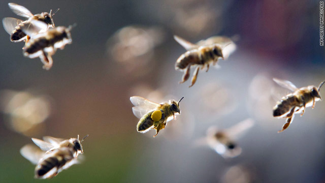 Swarming bees kill elderly Texas couple