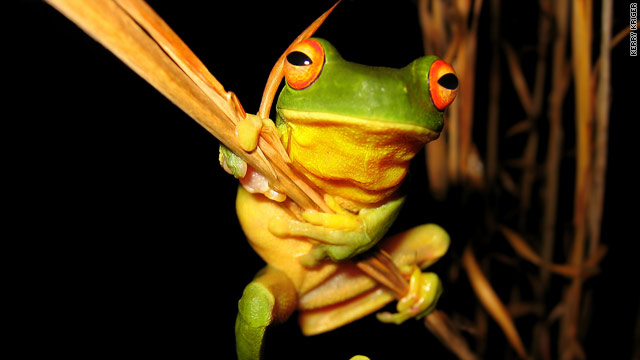 Frog lovers worldwide unite for 'Save the Frogs' day