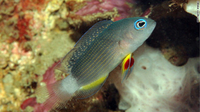 Eight potentially new fish species found along Bali reefs