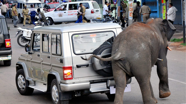 Elephant kills man in India