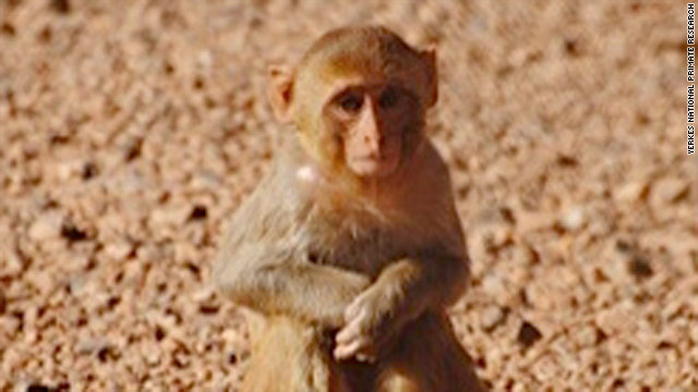 Rhesus monkey missing from Atlanta university compound, primate center says