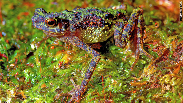 'Lost' toad rediscovered in Borneo