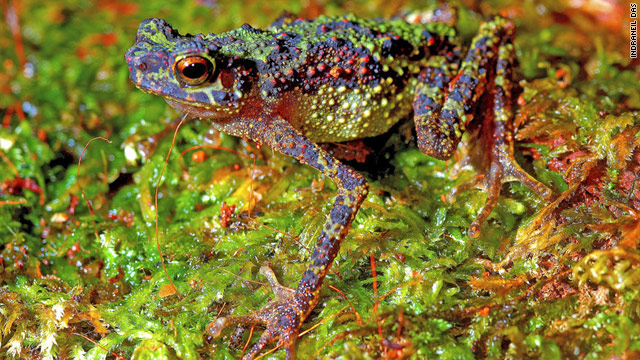 Lost rainbow toad reappears after 87 years