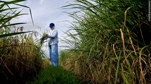 Report: Genetic breakthrough could increase value of rice by 25%