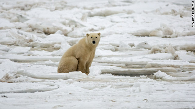 Scientists: Arctic ice may not go away so quickly