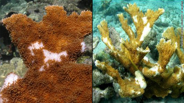 What's killing coral near Key West? Study points to human waste