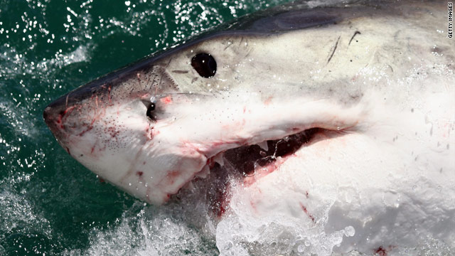 Two mauled in shark attacks off Russia's east coast