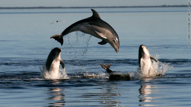 New species of dolphin discovered off Australia