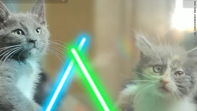 OMG, 'Jedi Kittens!'