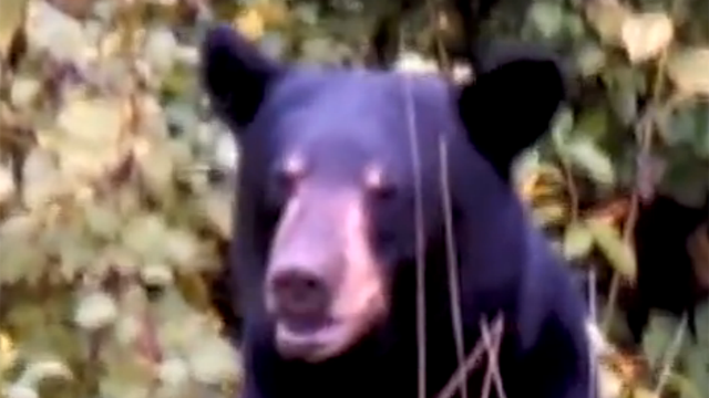 A father and son have a very close encounter with a bear in Virginia.