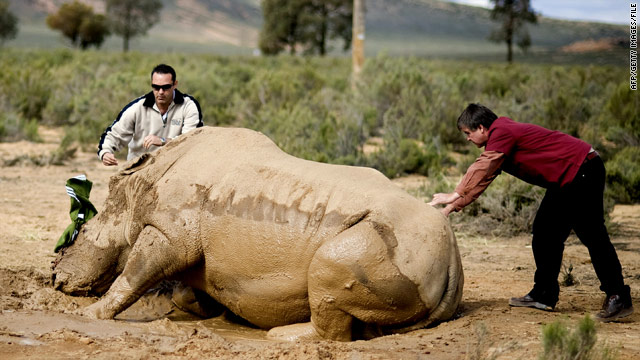 287 rhinos killed by poachers in South Africa this year, World Wildlife Fund says