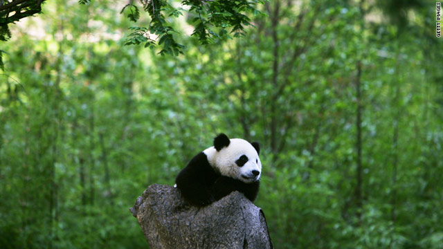 Why debt crisis keeps France waiting for Chinese pandas