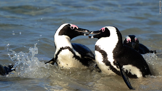 """Gay penguins"" separation at Toronto Zoo sparks furor"