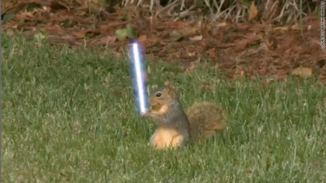 Jedi squirrels? Yes plz!
