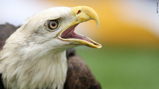 Feds grant Native American tribe permit to kill bald eagles for religious purposes