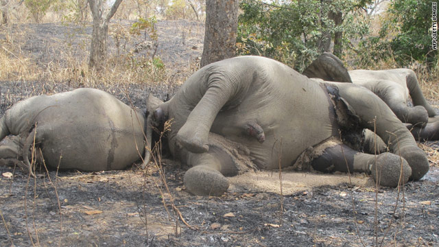 African elephant slaughter highest in more than two decades, experts say
