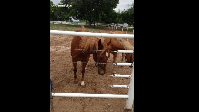 Horses affected by the deadly Oklahoma tornado