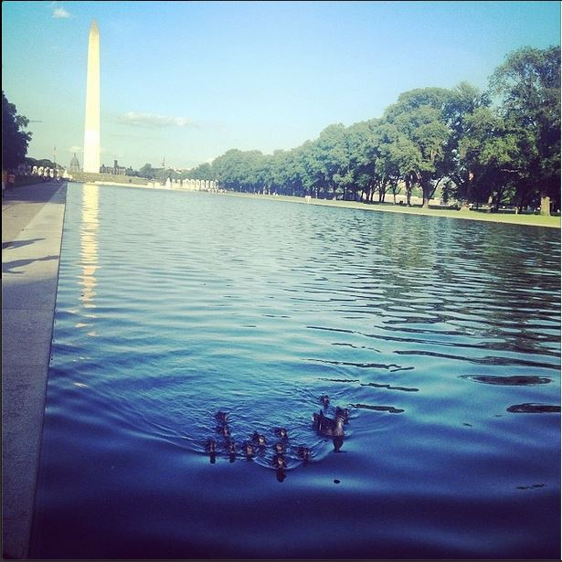 Photo of the Day: See Ducks by the Washington Monument