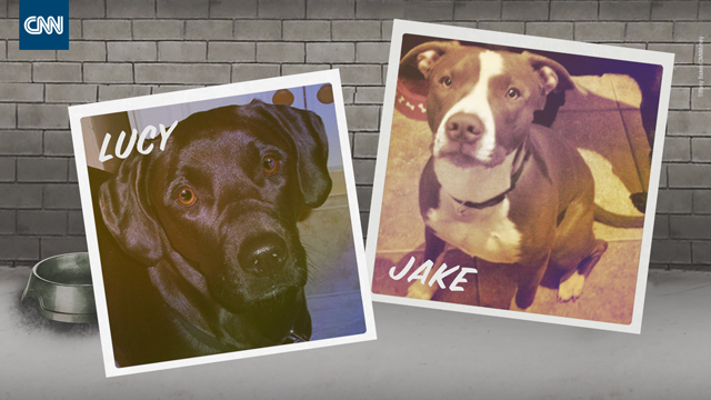 CNNMoney Investigation: Dogs being killed over unpaid fines