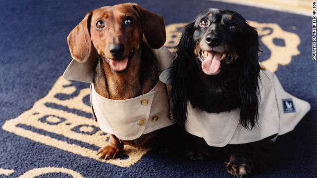 The Ritz Carlton New York offers Burberry raincoats for pets.