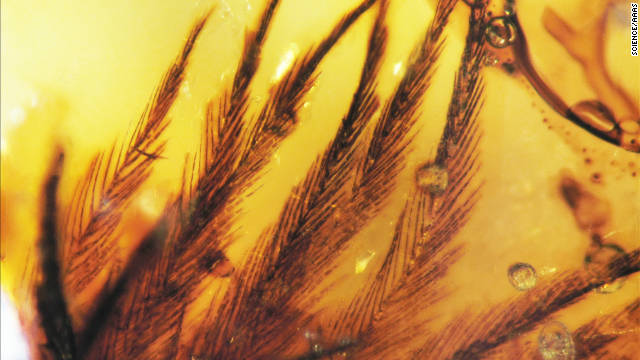 Feather inclusions in amber from Grassy Lake, Alberta