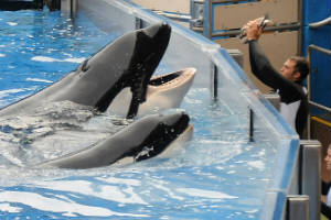 Trágicos incidentes con animales exóticos