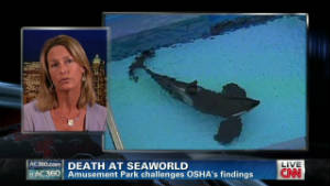 seaworld trainers working with killer whales is a