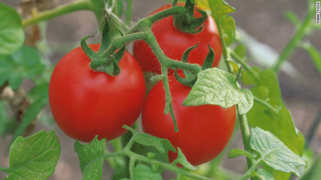 During 2005 and 2006, <a href='http://www.cdc.gov/mmwr/preview/mmwrhtml/mm5635a3.htm' target='_blank'>four large outbreaks of salmonella</a> infections hit 21 states in the United States. Tainted tomatoes being served in restaurants were found to be the cause. Investigators linked the produce to fields in Florida, Ohio and Virginia.