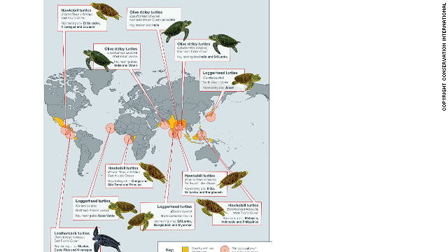 The world's 12 healthiest sea turtle populations