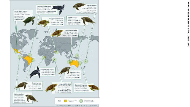 The world's 11 most threatened sea turtle populations