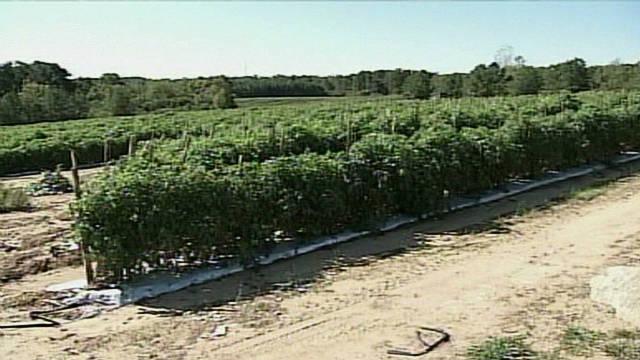 Los campos de Alabama se quedan sin mano de obra por la HB 56, dicen agricultores