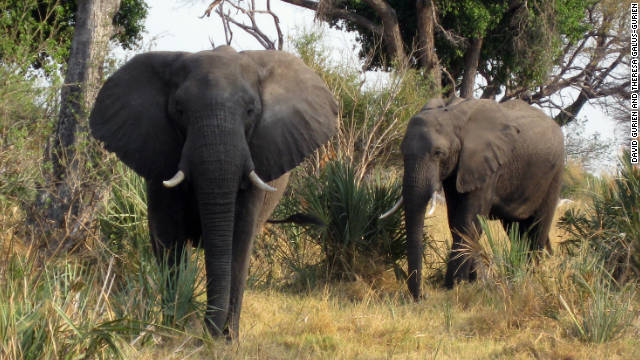 Elephants are among the likely animal sightings on the delta.