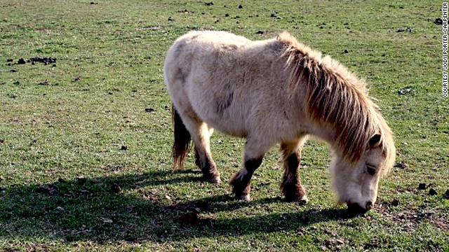 A miniature horse grazes on the farm. The Humane Society of the United States urged Ohio officials on October 19 to issue an emergency rule to crack down on exotic animal ownership.