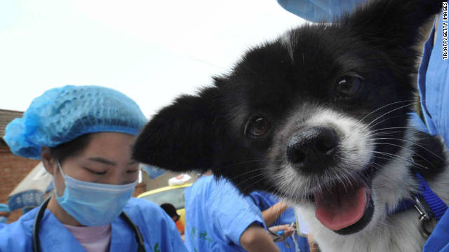 A veterinarian carries a dog to be sterilized in a local government campaign to neuter abandoned pet dogs in Beijing on May 30.