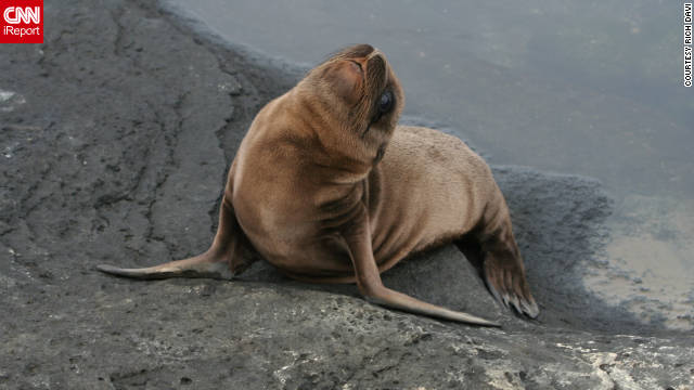 "Rich Davi of Holland Township, New Jersey, shared this picture of a friendly-looking sea lion. Galapagos sea lions and fur seals breed primarily on the islands. ""For me, being a biologist, it was the trip of a lifetime. From the time we arrived, it was fantastic."" He traveled on a cruise ship that provided his meals and housing. Activities included snorkeling, nature hikes and photography."