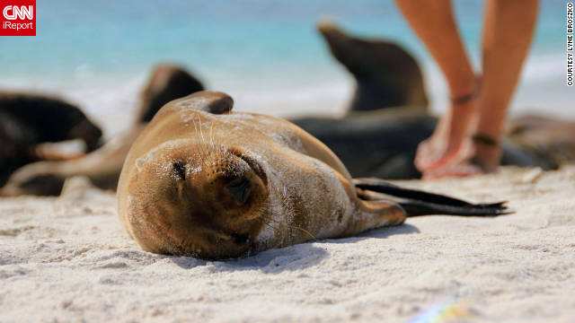 Lyne Broszko of Montreal shot this adorable photo of a sea lion pup sunning itself on a Galapagos Islands beach in Ecuador. &quot;All the sea lions have grown accustomed to having visitors on their islands, so we humans are only slightly annoying paparazzi to them,&quot; she said.
