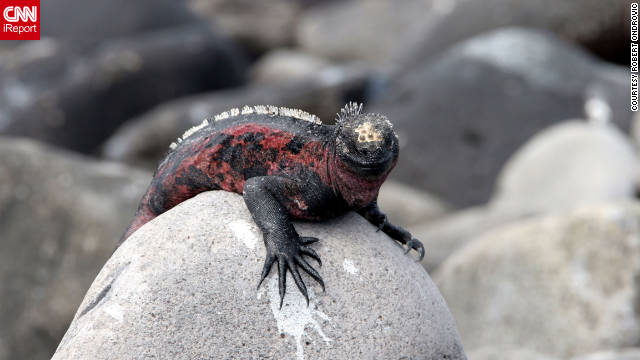 This iguana has six toes. Ondrovic loves the Galapagos Islands. &quot;It is my absolute favorite place I have traveled in the world, and I am looking forward to returning. So few people have actually traveled there, so I wanted to share some of the sights with CNN readers and viewers, most of whom will never get to experience it in person.&quot;