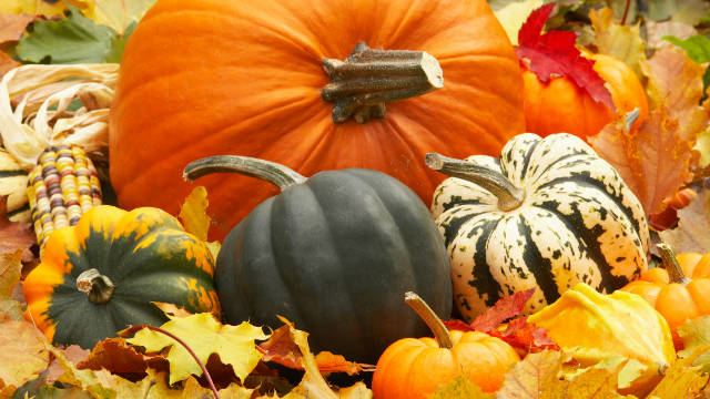 Breakfast buffet: National pumpkin day