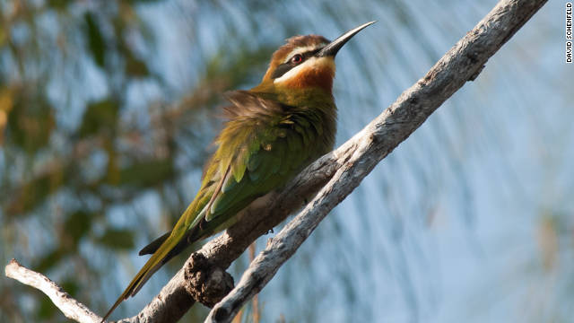 A Madagascar Bee-eater on Bazaruto Island. It's estimated over 160 different birds have been identified on the islands.