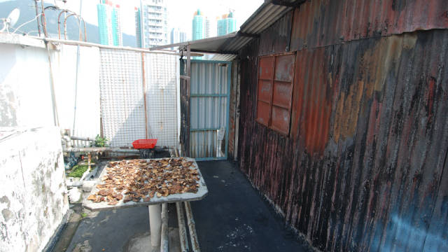 Mushrooms are spread out to dry at this rooftop settlement in Sham Shui Po, Hong Kong.