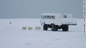 The tundra buggy allows visitors to see polar bears up close.