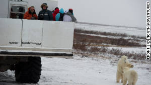 Tourists keep a close eye on polar bears at the Churchill Wildlife Management Area in Manitoba.