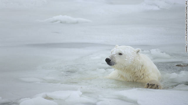 Experts say the most accessible and safest place in the world for tourists to view wild polar bears is near Churchill, Manitoba.