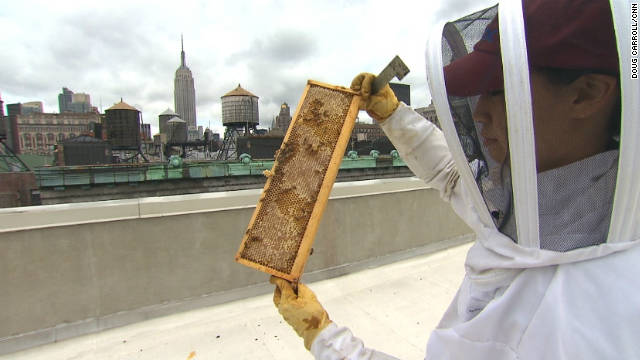 City-dwellers swarm to urban beekeeping