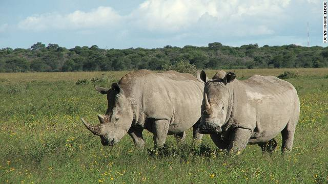 "Africa's northern white rhino is ""teetering on the brink of extinction"" according to the lastest IUCN Red List"