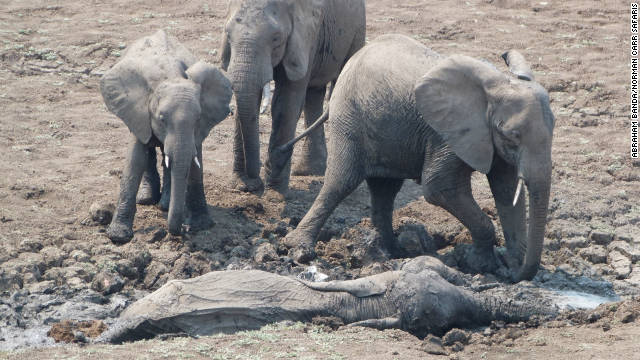 Overheard on CNN.com: Elephant rescue is uplifting story