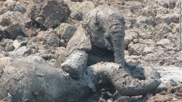 A mother and baby elephant were found distressed and dehydrated, sinking in deep mud at a safari park in Zambia.