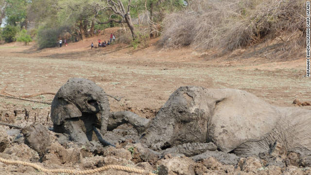 Staff from Kapani Safari Lodge used a rope in order to pull the baby elephant from the mud.