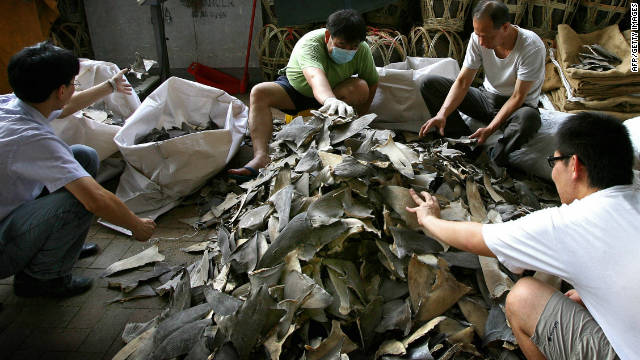 Workers prepare shark fins for sale in Hong Kong on September 1, 2007. Almost 80% of Hong Kongers now consider it socially acceptable to leave shark fin soup off the menu.